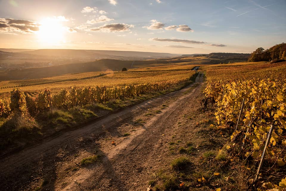 Sunset bicycle tours reims